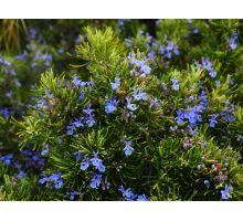AWA herbs Rozmarýn lékařský list 50g